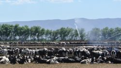 Concentrated Animal Feeding Operation (CAFO) Permit Update – in English / en Español